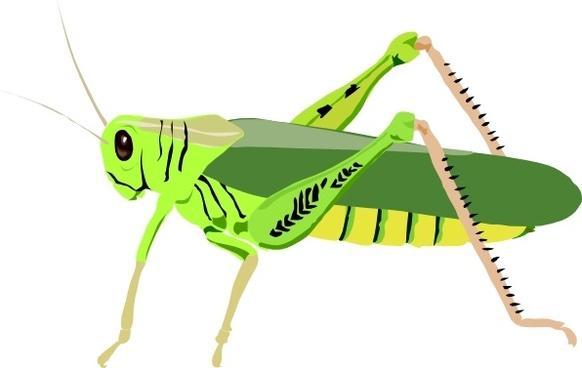 Grasshopper Locust clip art