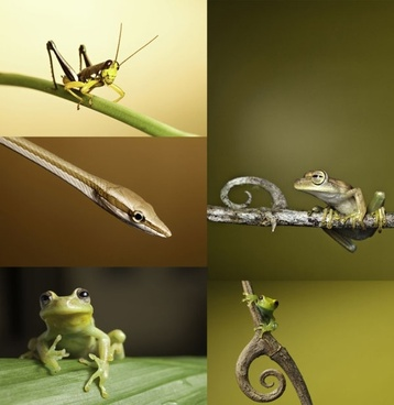 grasshoppers snakes tree frogs hd picture