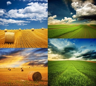 grassland hd picture 4p