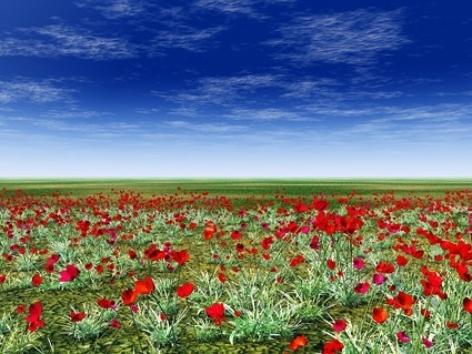 grasslands on red flower picture