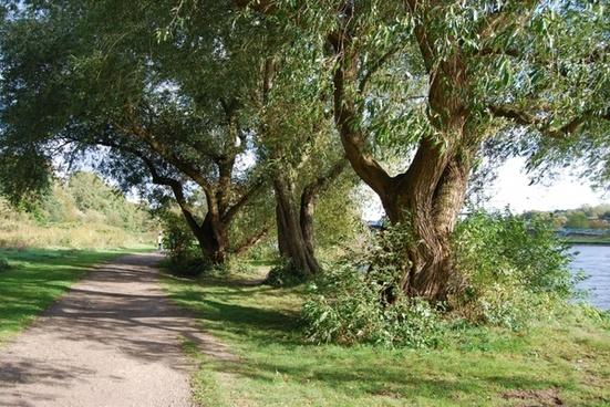 graze trees uferweg