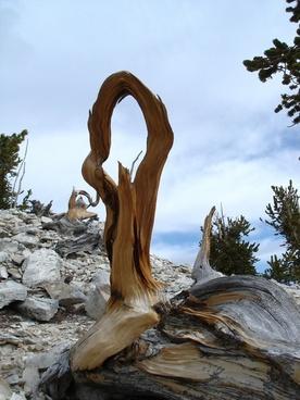 great basin national park nevada landscape