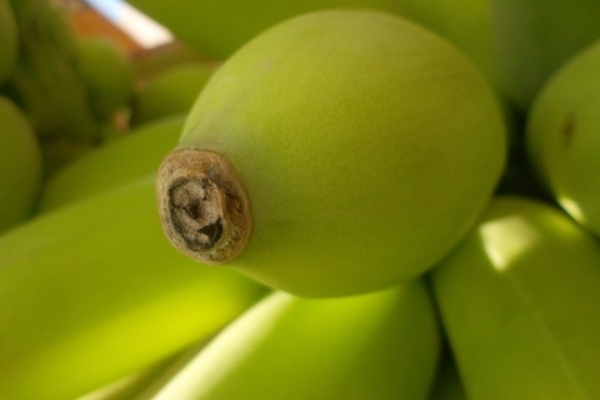 green bananas tip