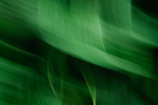 green blur 4