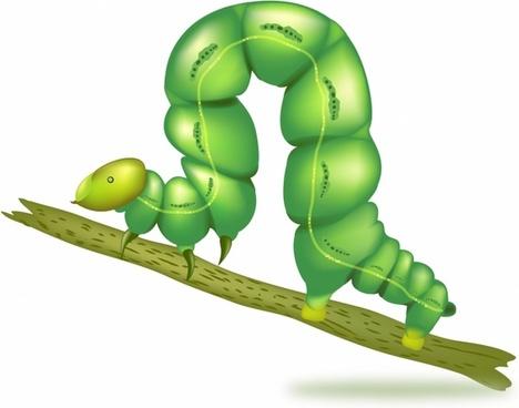 Green caterpillar insect