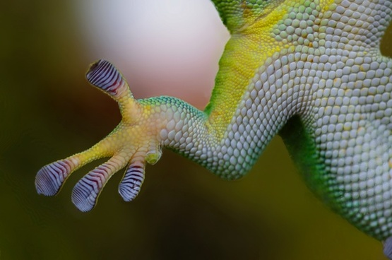 green gecko paw