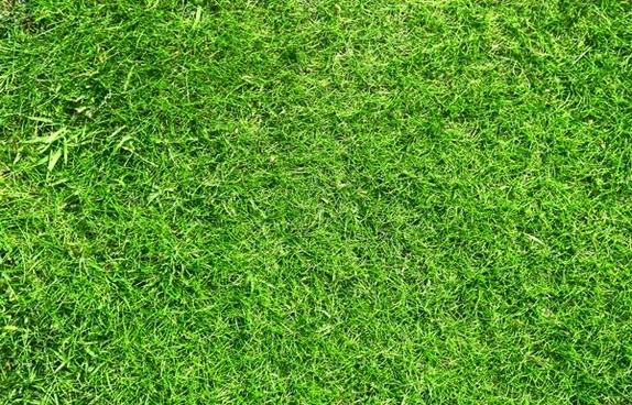 green grass 03 hd picture