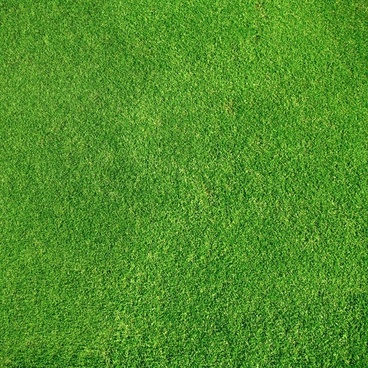 green grass 05 hd picture