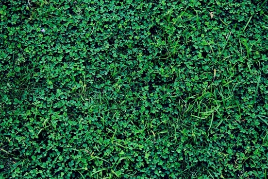 green grass background 2
