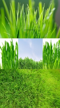 green grass grass closeup highdefinition picture 1 5p