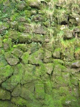 green grass texture with moss