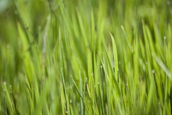 green grasses nature