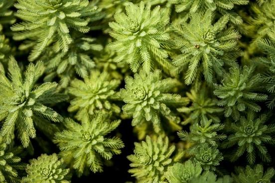 green green plant grass