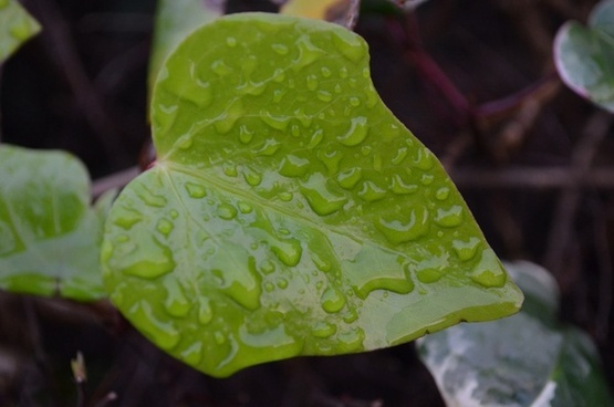 green leaf and raindrops