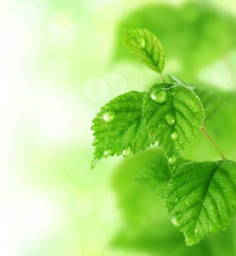 green leaf background 01 hd pictures