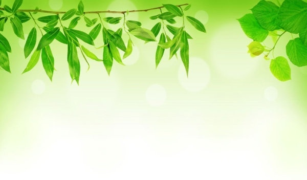 green leaf background 04 hd picture