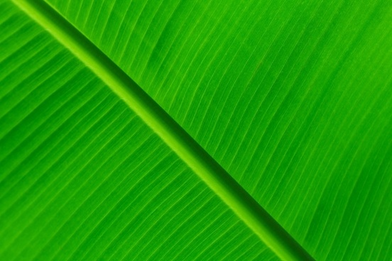 Green Leaf Background Images Free Stock Photos Download 14 175 Free Stock Photos For Commercial Use Format Hd High Resolution Jpg Images