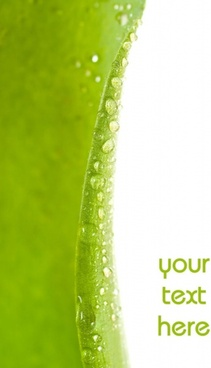 green leaf drops hd picture 2