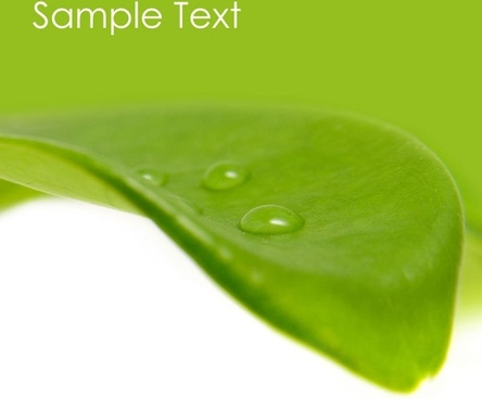 green leaf drops hd picture 3
