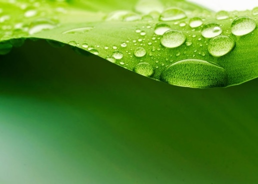 green leaf drops hd picture 5