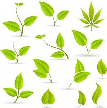 green leaves green leaves vector