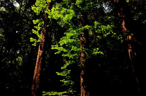 green leaves on brown trunks