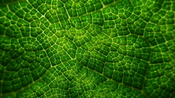 green leaves structure