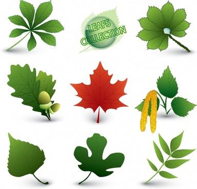 natural leaf icons modern colored shapes sketch