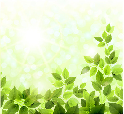 green leaves with sunlight design vector