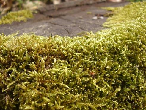 green letter plant