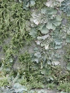 green moss lichen