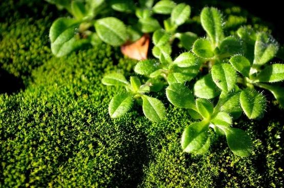 green moss macro
