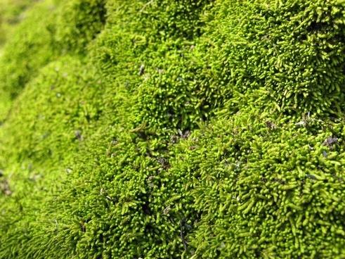 green moss texture