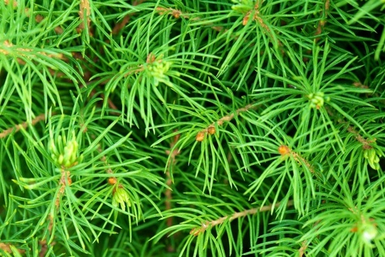 green needles background