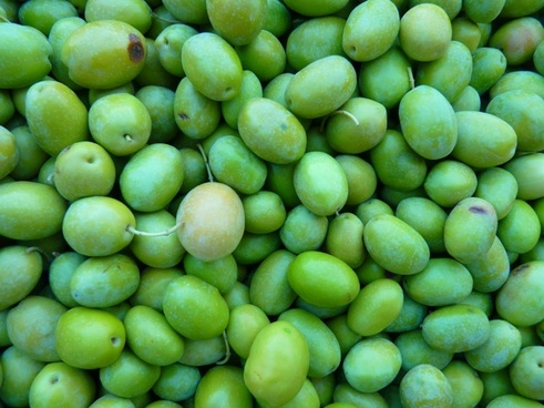 green olives olives immature