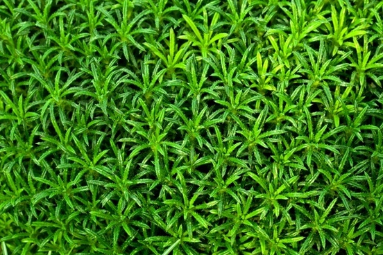 green plant wallpaper