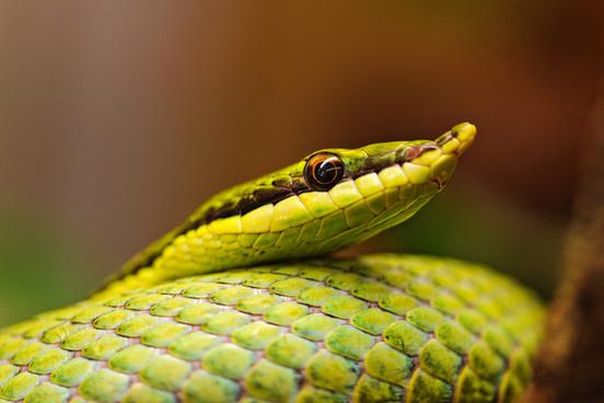 green pointy snake