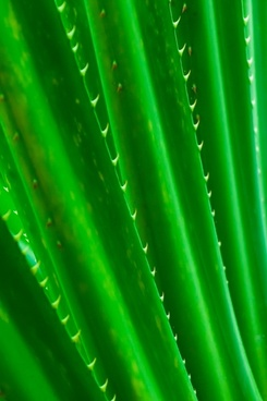 green spiky leaves