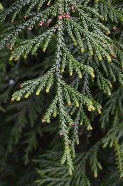 green twig tree