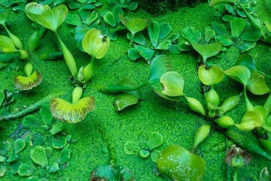 green water plants