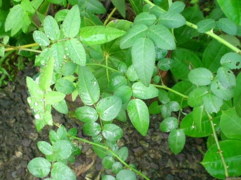 greenery photos