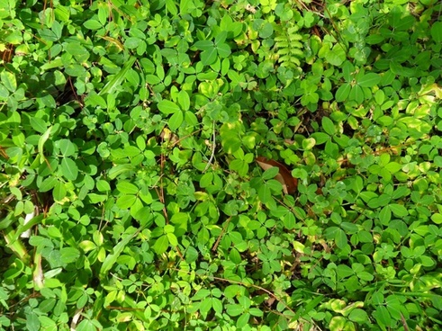 greenery texture