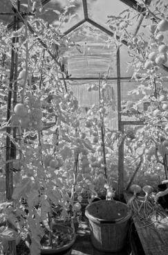 greenhouse digital infrared
