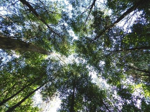 greens nature trees