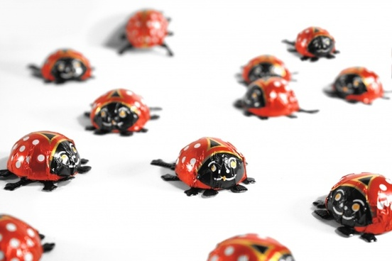 greeting card ladybug luck