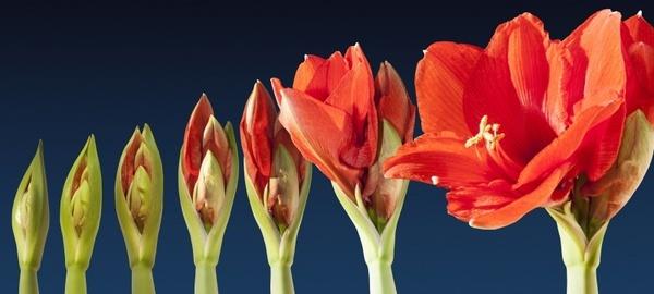 grow blossom time lapse