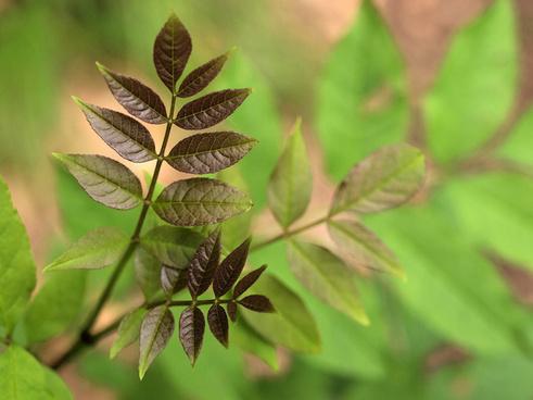 growing leaves