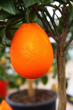 growing orange