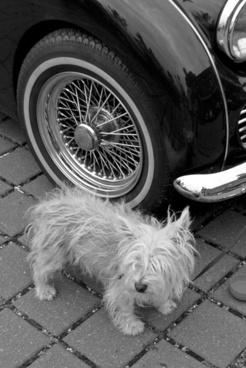 guard dog oldtimer guard