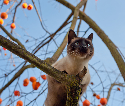 guardian of the persimmon tree